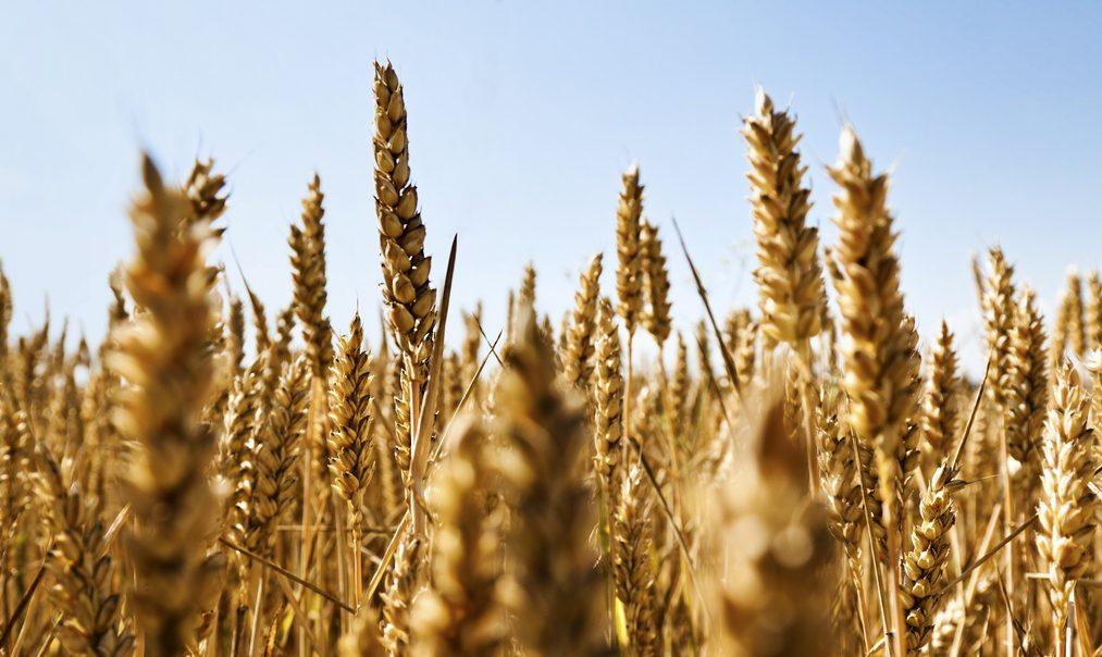 Vertrieb von Pflanzenschutzprodukten